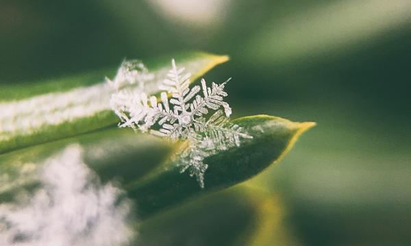 Eine Nahaufnahme einer einzelnen Schneeflocke
