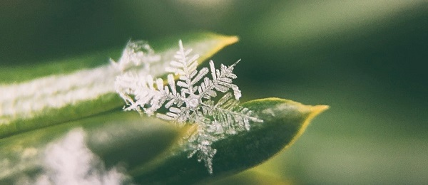 snowflake on a blade of grass