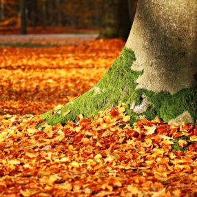 Foglie d'autunno in un parco