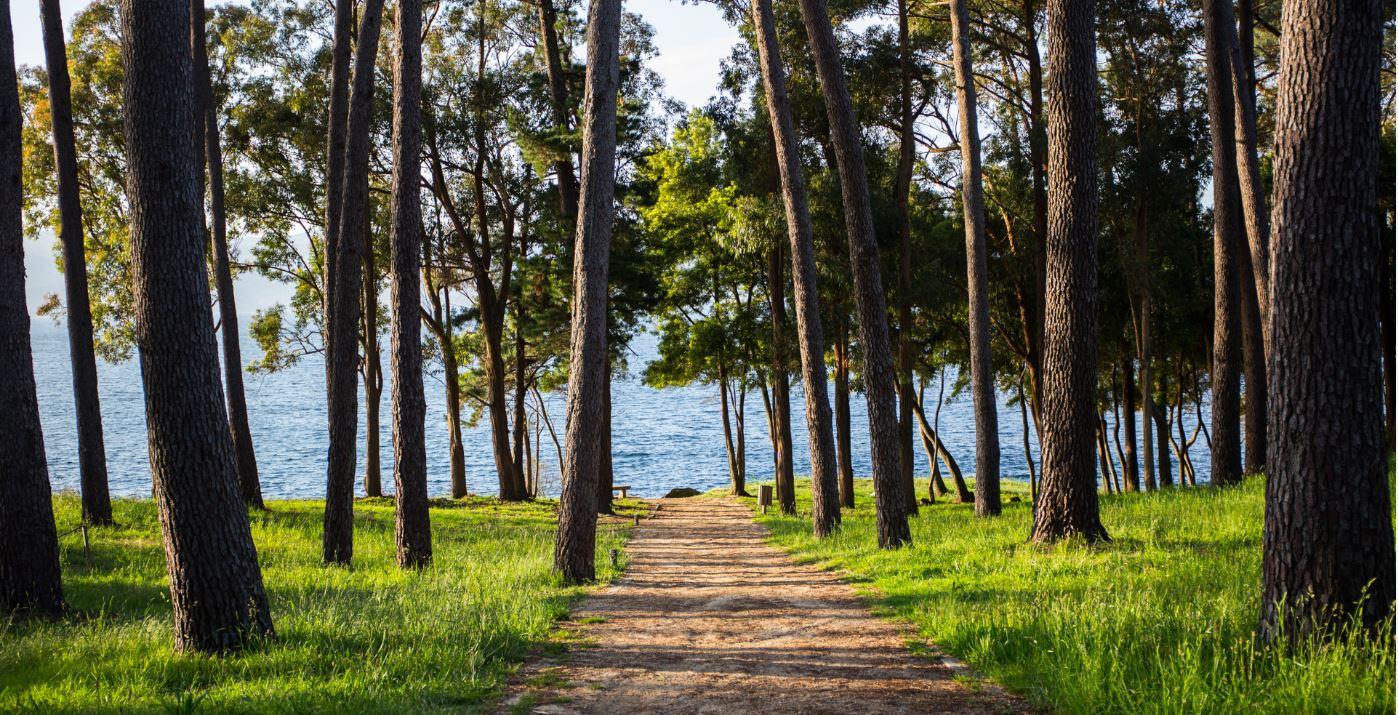 Camino de tierra que conduce al mar